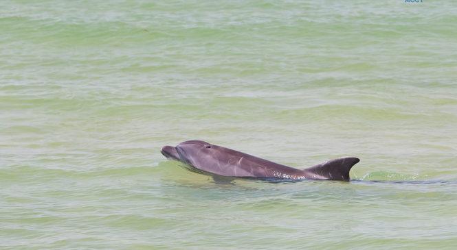 Экомониторинг: стройка в Керченском проливе спровоцировала рост численности дельфинов
