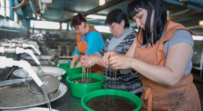 Молодь русского осетра выпустят в естественную среду по экопрограмме Крымского моста