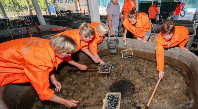 Вторая партия мальков русского осетра выпущена в водоемы по экопрограмме Крымского моста (ВИДЕО)