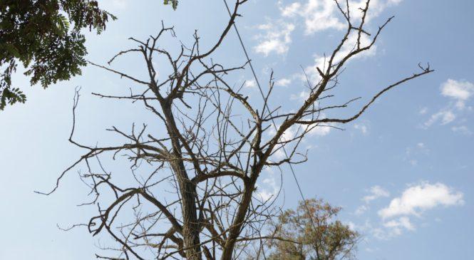 По ул. Ульяновых необходимо произвести обрезку деревьев