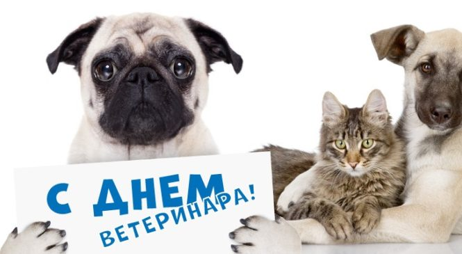 31 августа — День ветеринарного работника