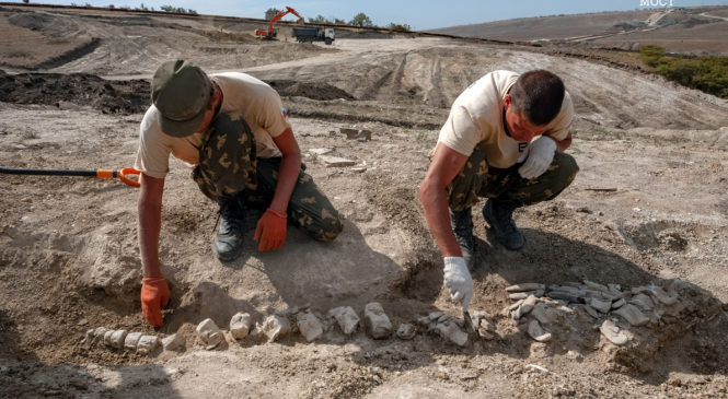 Уникальная находка: скелет древнего кита найден на участке будущей  железной дороги-подхода к Крымскому мосту