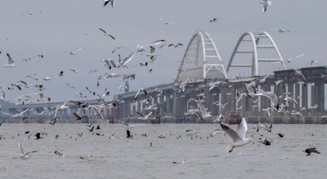 Экологи установили кормушки для птиц  рядом с Крымским мостом