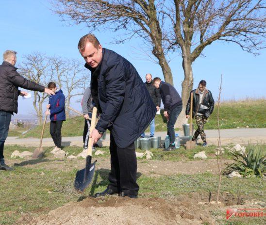 На склоне Митридата высадили молодые деревья