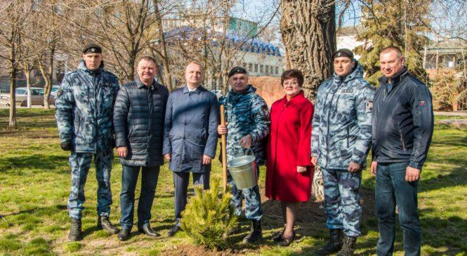 В Керчи у администрации высадили шестилетние ели из Макеевки в память об историческом Референдуме