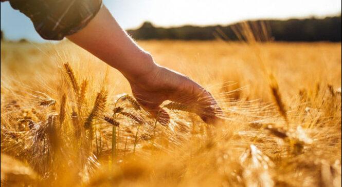 11 октября — День работников сельского хозяйства и перерабатывающей промышленности
