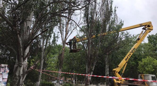 В Керчи проводится работа по обрезке деревьев
