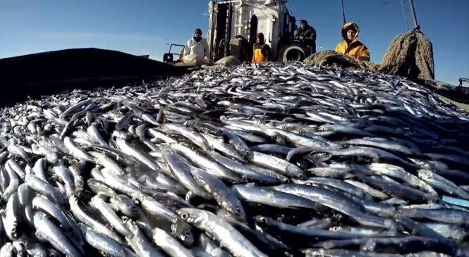 11 июля — День рыбака